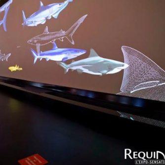 Fresque interactive Requins