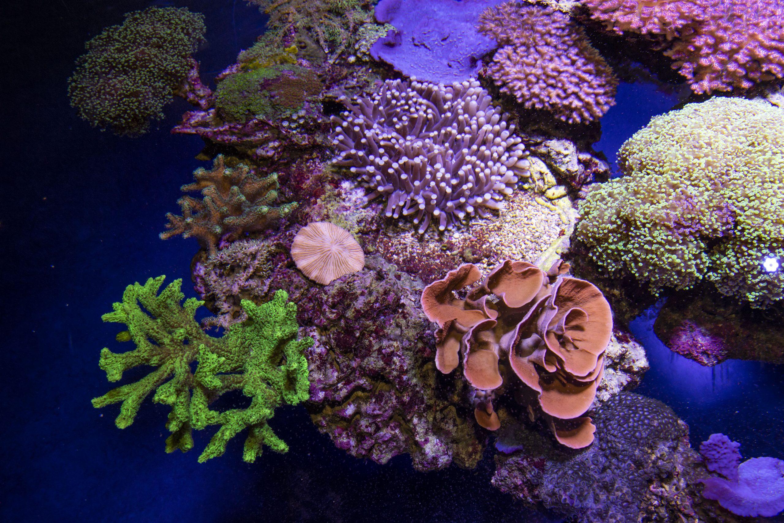 Bac Plongée de nuit coraux fluorescents