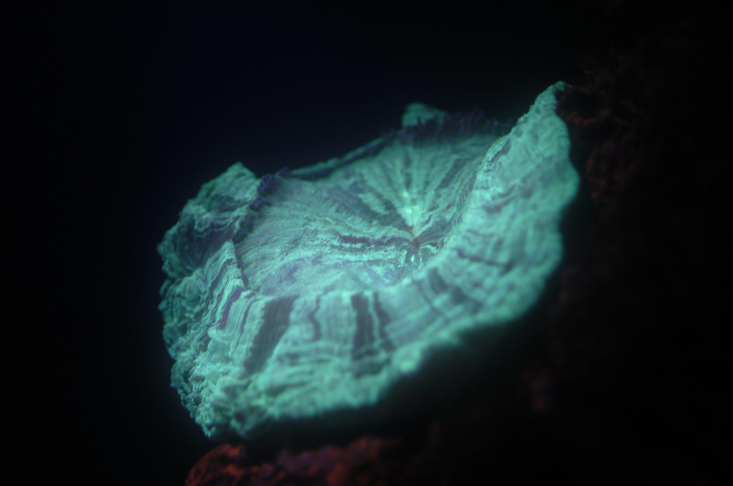 MOM 11642 M. Dagnino