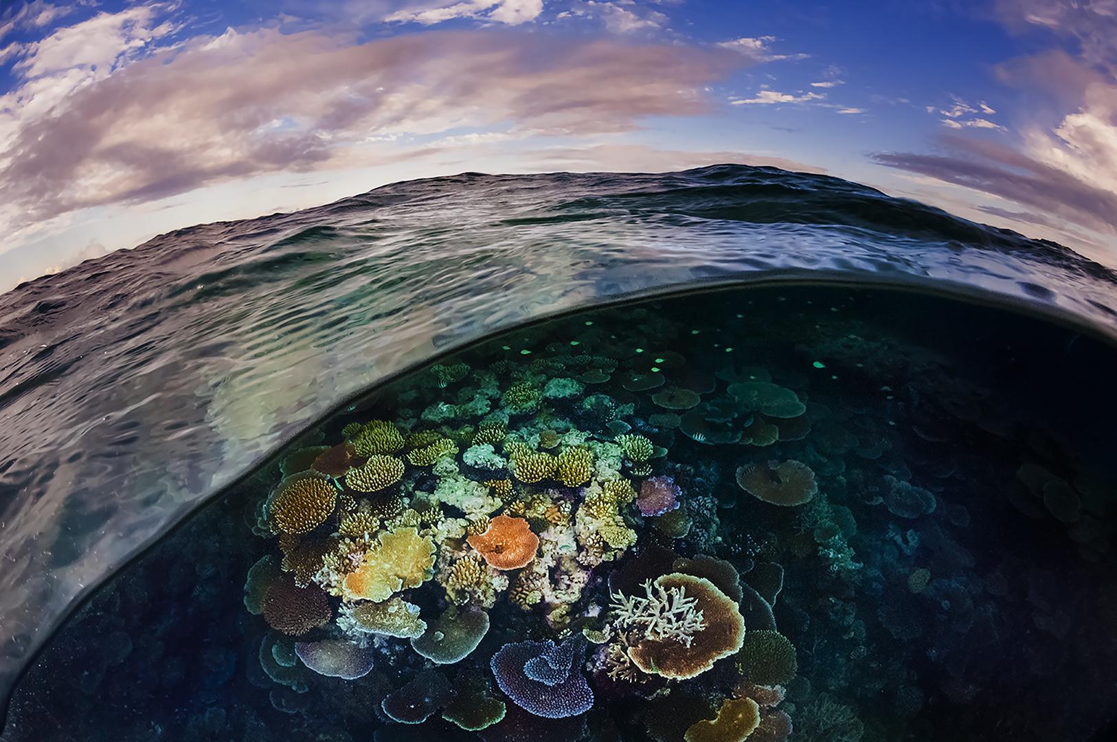 Récif révélé. Une vague se brise en révélant une plateforme corallienne colorée sur le récif d'Opale sur la Grande Barrière de Port Douglas, en Australie. Malheureusement, ces coraux ont péri peu à peu lors de vagues de blanchissement survenues à l'occasion des hausses de la température de l'océan en 2016 et 2017, provoquant ainsi du stress et la perte de leur algue symbiotique. Les années consécutives de stress thermique ont provoqué une mortalité élevée des récifs de la Grand Barrière.