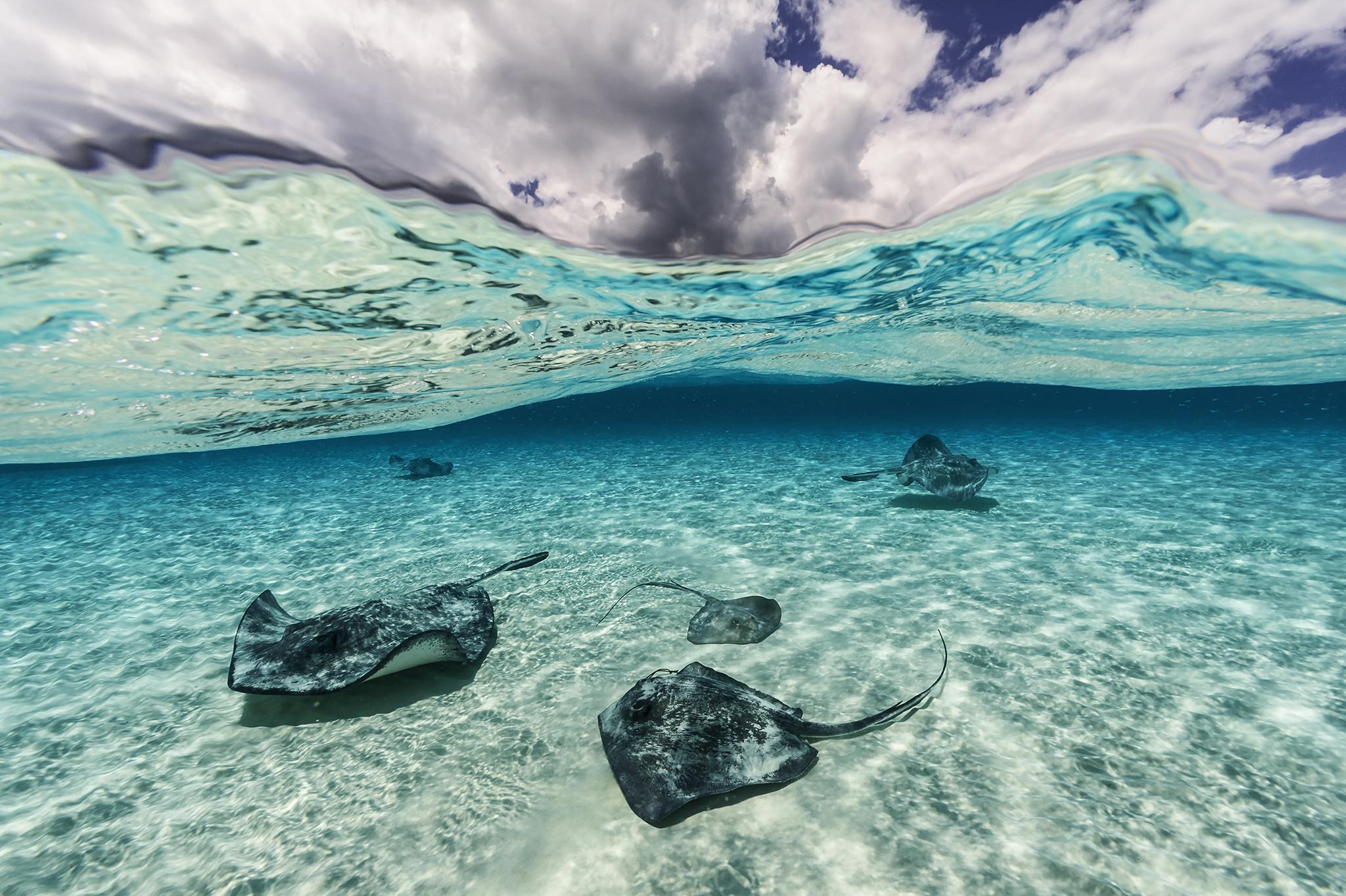 Raies et ciel. Un escadron de raies du sud (Hypanus americanus) parcourt les eaux sous un ciel impressionnant à North Sound, l'île de Grand Cayman. Les raies accueillent des milliers de touristes par jour, en espérant un morceau de calamar, puis disparaissent pour retourner à leur vie secrète.