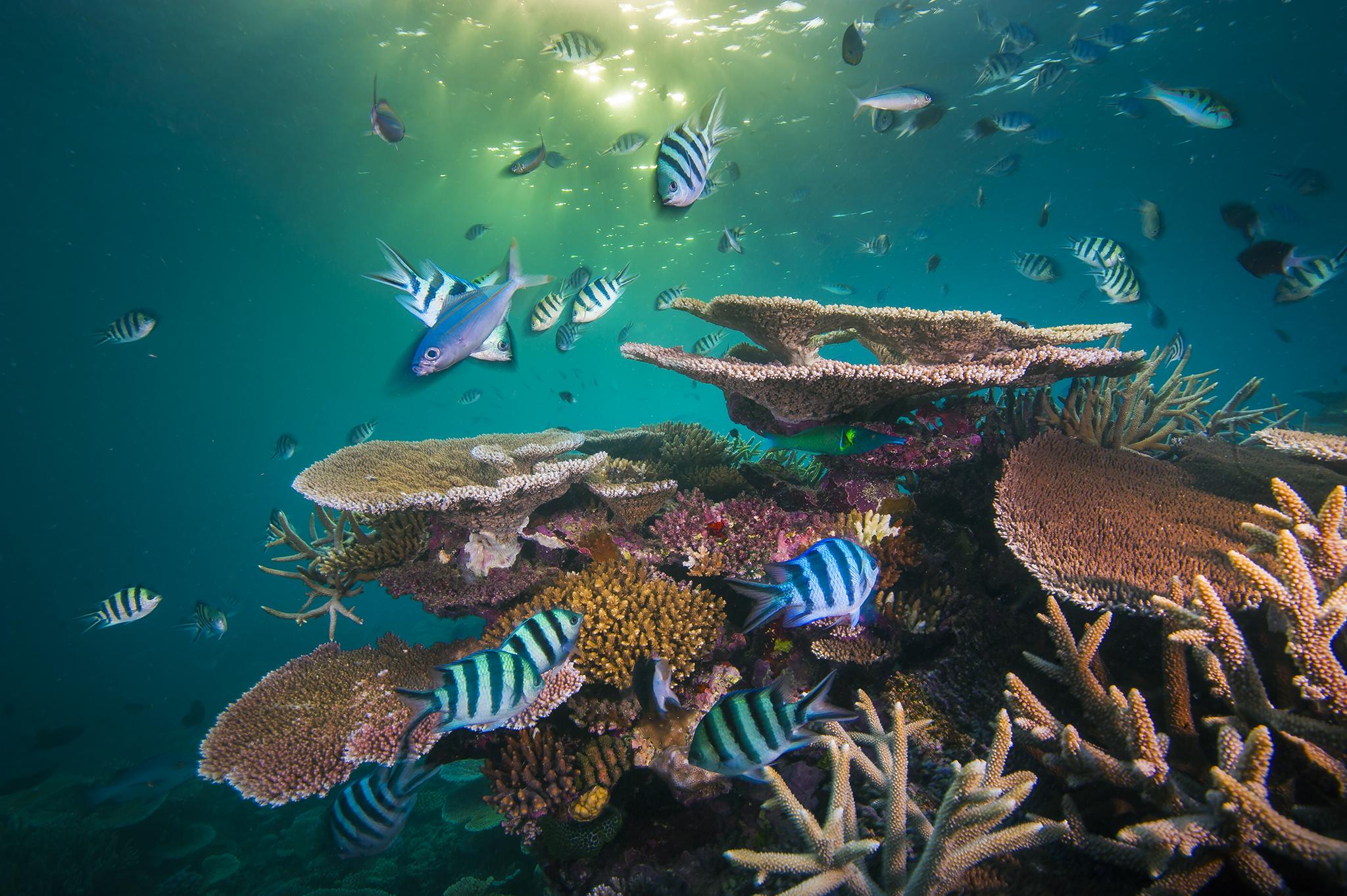 Lever de soleil sur le récif. Les récifs coralliens sont comme des villes dans la mer, pleins de vie et de créatures qui y vivent. Ce recoin du récif d'Opale, dans la Grande Barrière de Corail, en Australie, regorgeait de vie jusqu'en 2017, lorsque le stress thermique a provoqué le blanchissement des coraux et leur mort. Nous surveillons et suivons l'évolution de ces sites coralliens dans le cadre d'un projet appelé Coral Through the Lens of Time (Coraux sous l'objectif du temps)