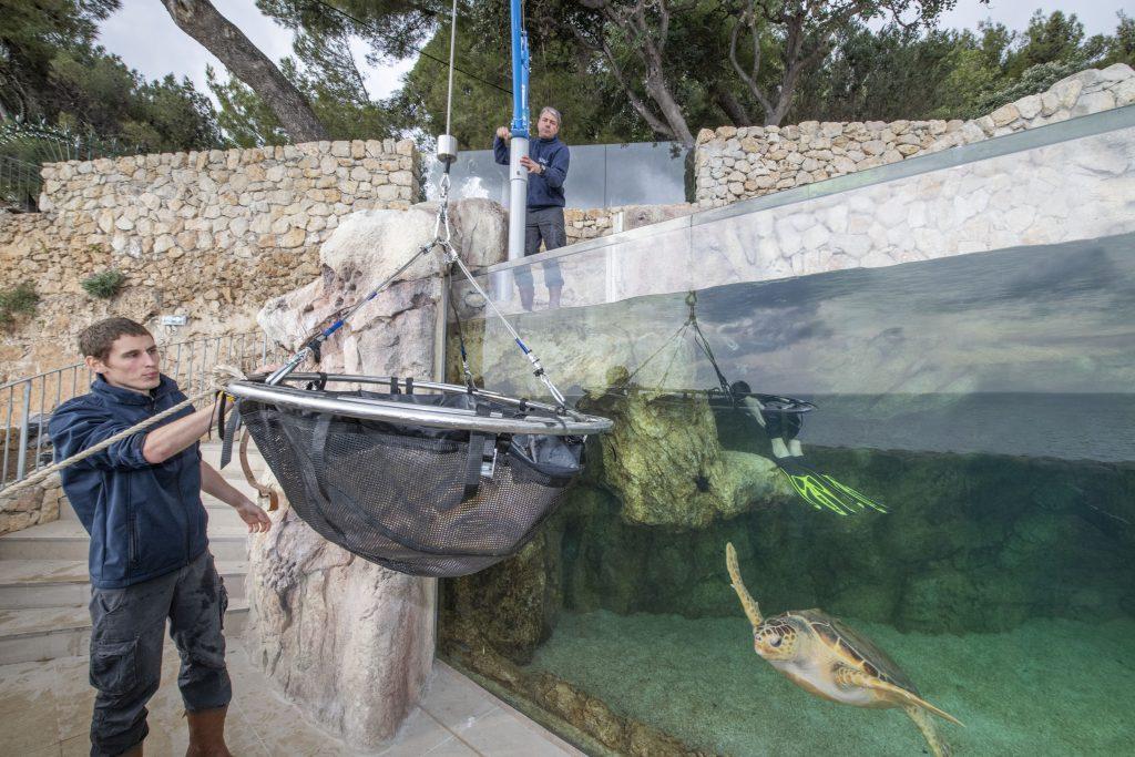 Le centre de soin sera un espace de médiation environnementaleLes tortues, baromètres de l'état de santé des océans subissent la plupart des pressions que l'homme exerce sur l'océan, des côtes à la haute mer : urbanisation, surpêche et prises accidentelles, collisions, pollutions ou encore accumulation de plastique.Le destin des tortues est entre nos mainsLes tortues ont été capables de s'adapter à des évolutions importantes du climat et des milieux marin et côtier depuis 150 millions d'années. Aujourd'hui, nous imposons des changements bien plus rapides et leur sort dépendra de notre capacité à leur laisser une place sur les côtes et à gérer nos activités pour préserver l'océan.Le centre de soinsS'appuie sur l'expérience du Musée océanographique pour secourir, soigner et relâcher les tortues marines, il permettra de développer notre capacité d'intervention, en appui avec les services locaux (affaires maritimes, capitainerie, pompiers…) Et s'inscrit dans un réseau méditerranéen de soin des tortues, en partenariat avec le Réseau Tortues de la Méditerranée Française, le Centre d'études et de sauvegarde des tortues marines de Méditerranée.Réalisé dans le prolongement du Musée, en bordure des Jardins St Martin, ce centre sera central pour venir au secours de tortues blessées à Monaco et dans la région.Si le chantier se déroule comme prévu, ce centre pourra ouvrir dès 2018. Il sera composé d'une clinique de soins et d'un bassin de convalescence. Ce dernier, situé en plein air, sera intégré dans la visite du Musée. Tout en permettant aux tortues soignées de se remettre en toute tranquilité et sous étroite surveillance, les visiteurs pourront observer ces animaux et ainsi être sensibilisés à leur fragilité. Véritable outil d'animation et de médiation, la clinique et le grand bac à tortues seront utilisés pour inciter les visiteurs du Musée à agir concrètement, dans leur q