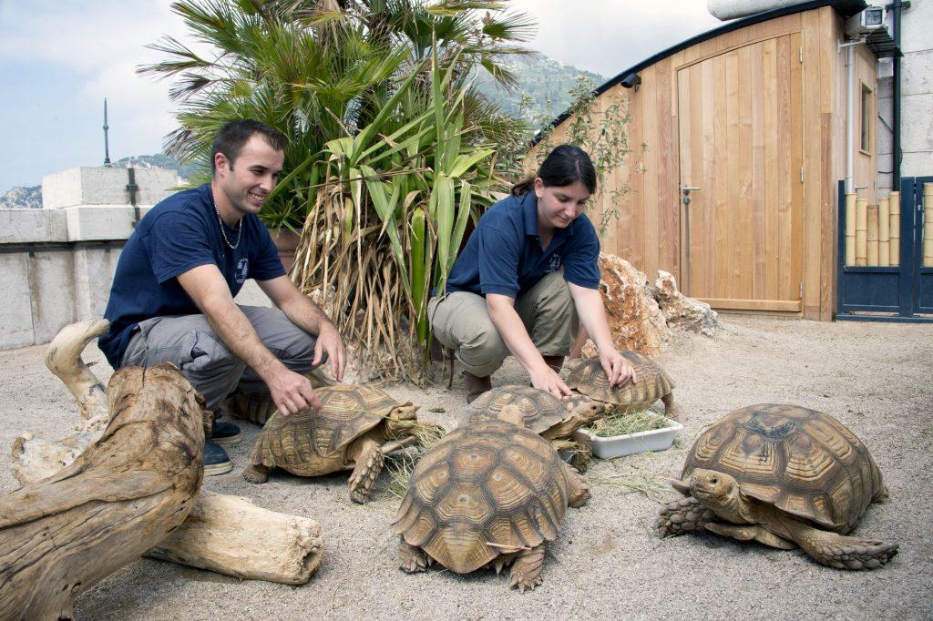 37 L île aux tortues M Dagnino