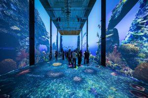 Exposition Immersion - Nagez avec les raies - Musée océanographique
