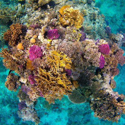 Corail vue du dessus - Immersion sous l'eau - Musée océanographique de Monaco