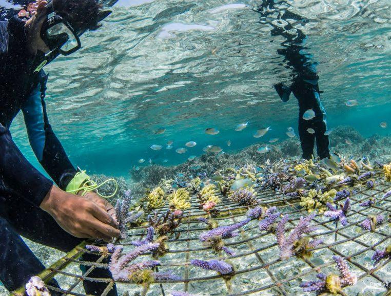 Exposition corail guardian musée océanographique monacol