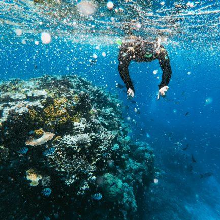 Plongeur Récif