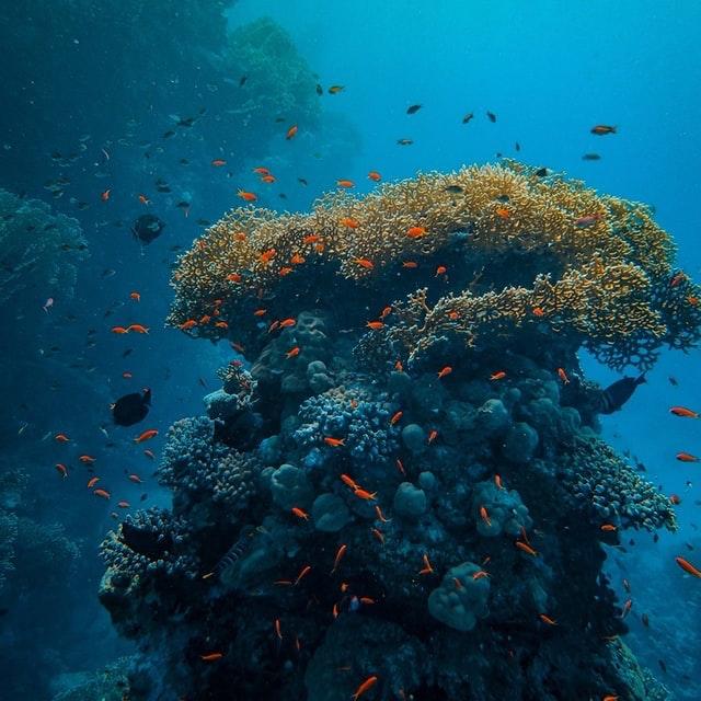 Découvrez le parcours corail