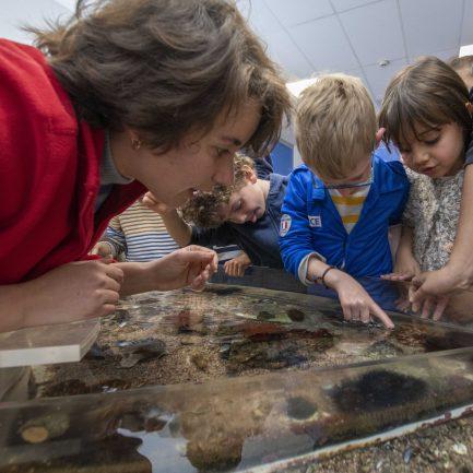 Caresser une étoile de mer, sentir les piquants d'un oursin, observer un bébé requin… Grâce à nos animateurs, venez apprendre avec vos mains et percer les secrets des habitants de la Grande Bleue.  C'est l'un des moments phares d'une visite au Musée océanographique de Monaco, l'opportunité pour les enfants de vivre une rencontre unique avec la faune et la flore de Méditerranée.  Durant 45 minutes, nos équipes vous proposent d'observer et de toucher différentes espèces évoluant dans un bassin ouvert. Au programme : mille et une anecdotes sur la coquille du bernard l'ermite, les œufs du requin roussette ou les pinces du crabe...  Guidés par nos animateurs, les enfants découvriront les particularités de ces animaux marins de la Méditeranée et apprendront à les reconnaître et les respecter. Une animation ludique à vivre en famille, tous les weeks-end et pendant les vacances scolaires !